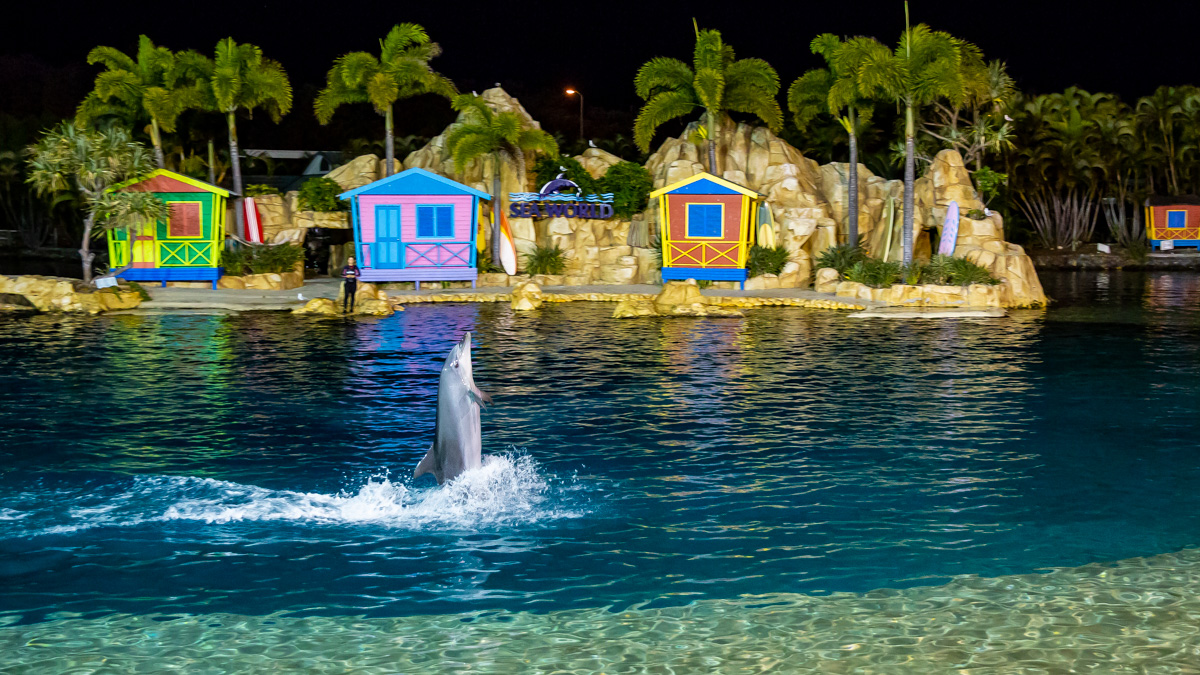 Corporate event entertainment at Seaworld Gold Coast