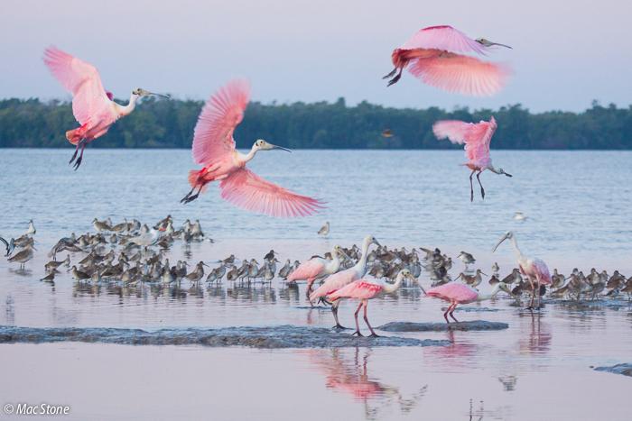 MacStone_Florida_Everglades-0048.jpg
