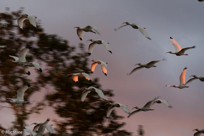 MacStone_Florida_Everglades-0022.jpg