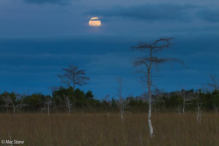 MacStone_Florida_Everglades-1783.jpg