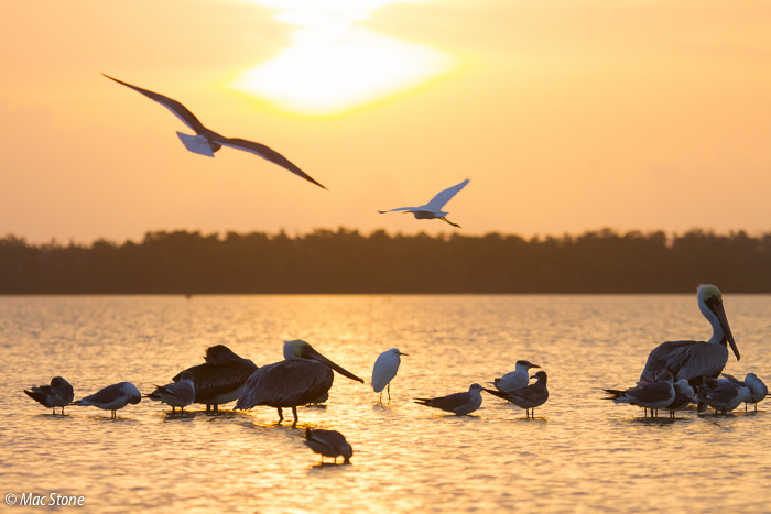 MacStone_Florida_Everglades-1821.jpg