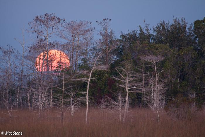 MacStone_Florida_Everglades-2764.jpg