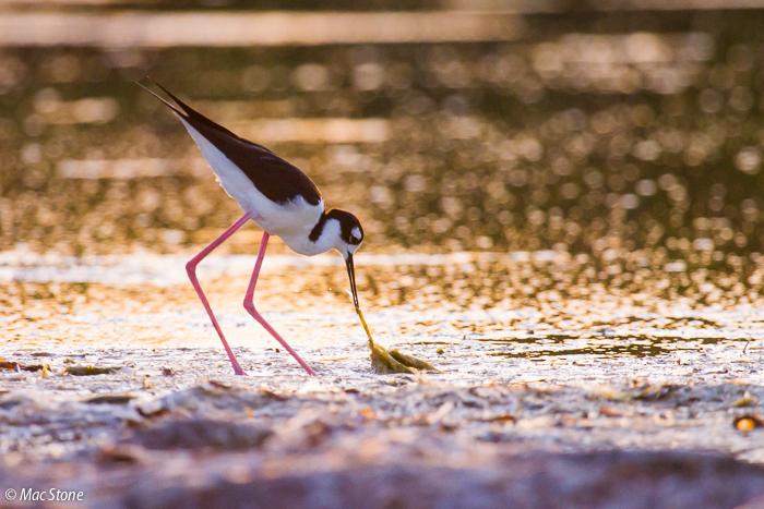 MacStone_Florida_Everglades-3567.jpg
