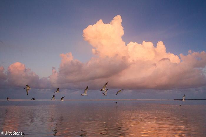 MacStone_Florida_Everglades-3657.jpg