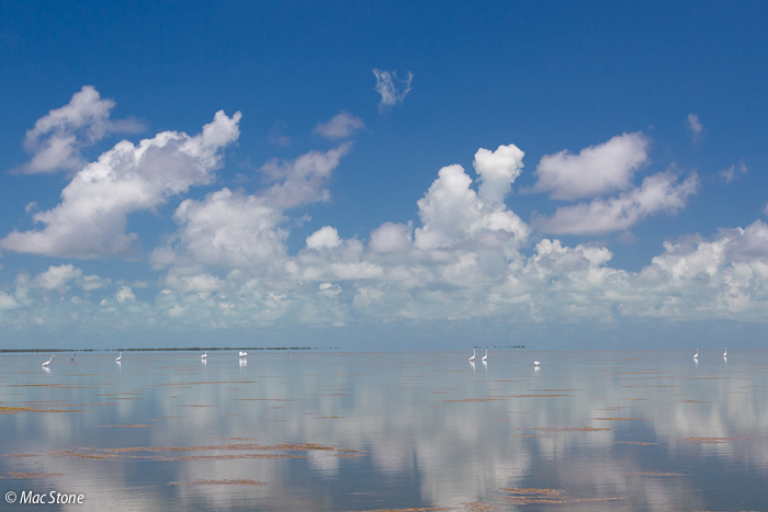 MacStone_Florida_Everglades-4114.jpg
