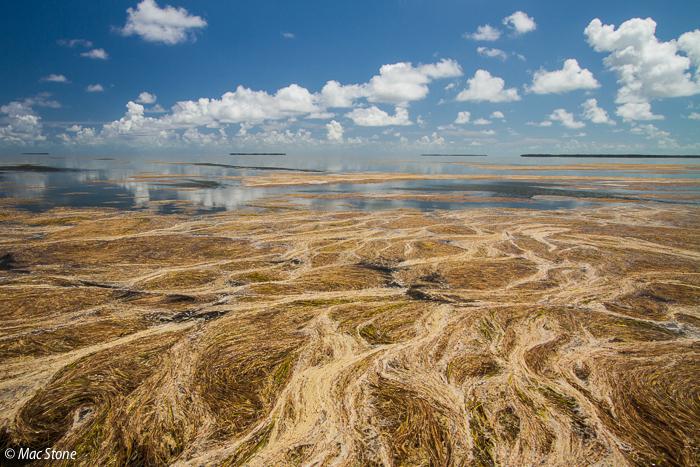 MacStone_Florida_Everglades-4335.jpg