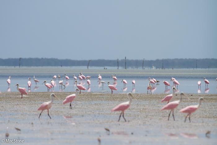 MacStone_Florida_Everglades-6004.jpg
