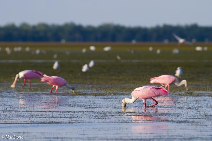 MacStone_Florida_Everglades-8093.jpg