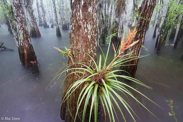 MacStone_Florida_Everglades-9488.jpg