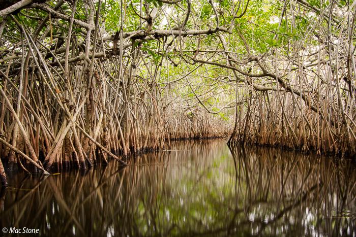 MacStone_Florida_Everglades-9655.jpg