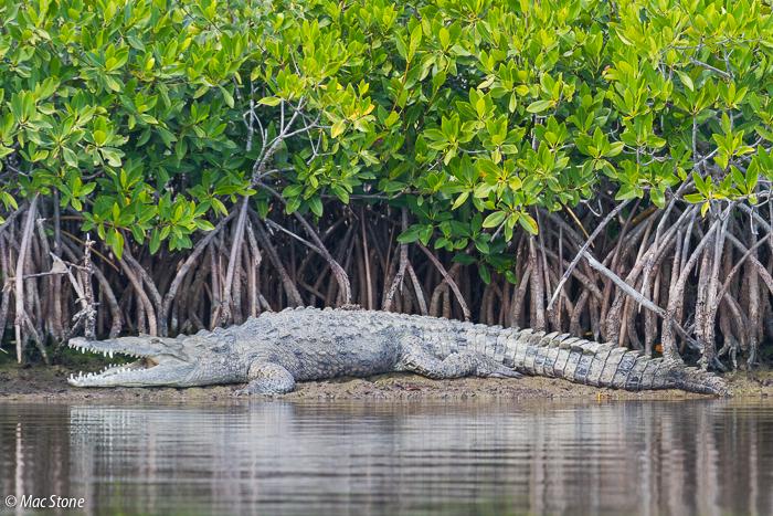 MacStone_Florida_Everglades-0275.jpg