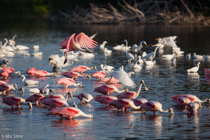 MacStone_Florida_Everglades-0397.jpg