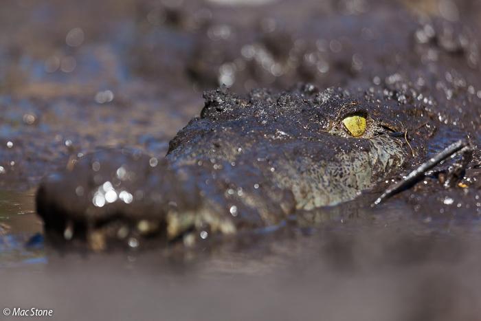 MacStone_Florida_Everglades-0258.jpg