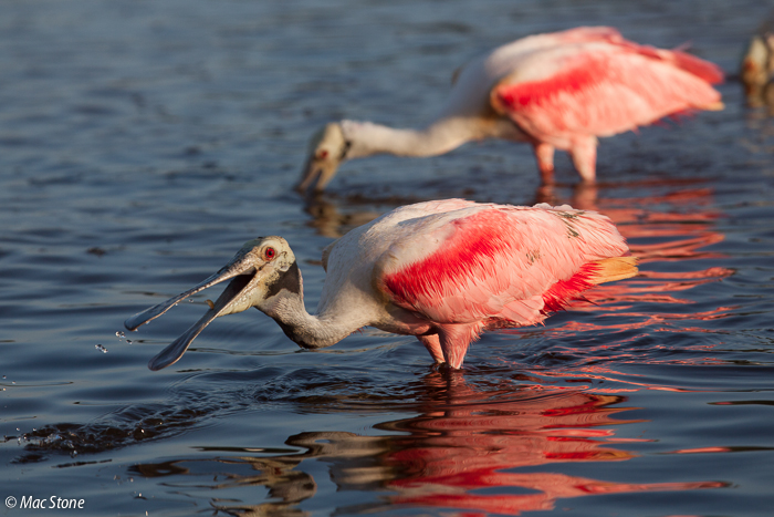 MacStone_Florida_Everglades-0680.jpg