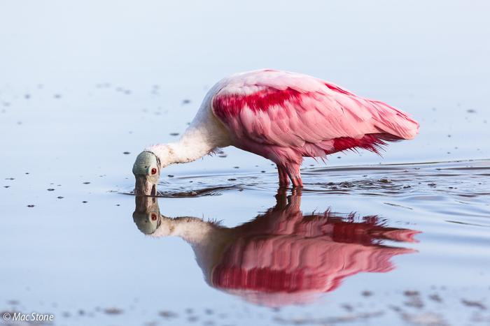 MacStone_Florida_Everglades-2074.jpg