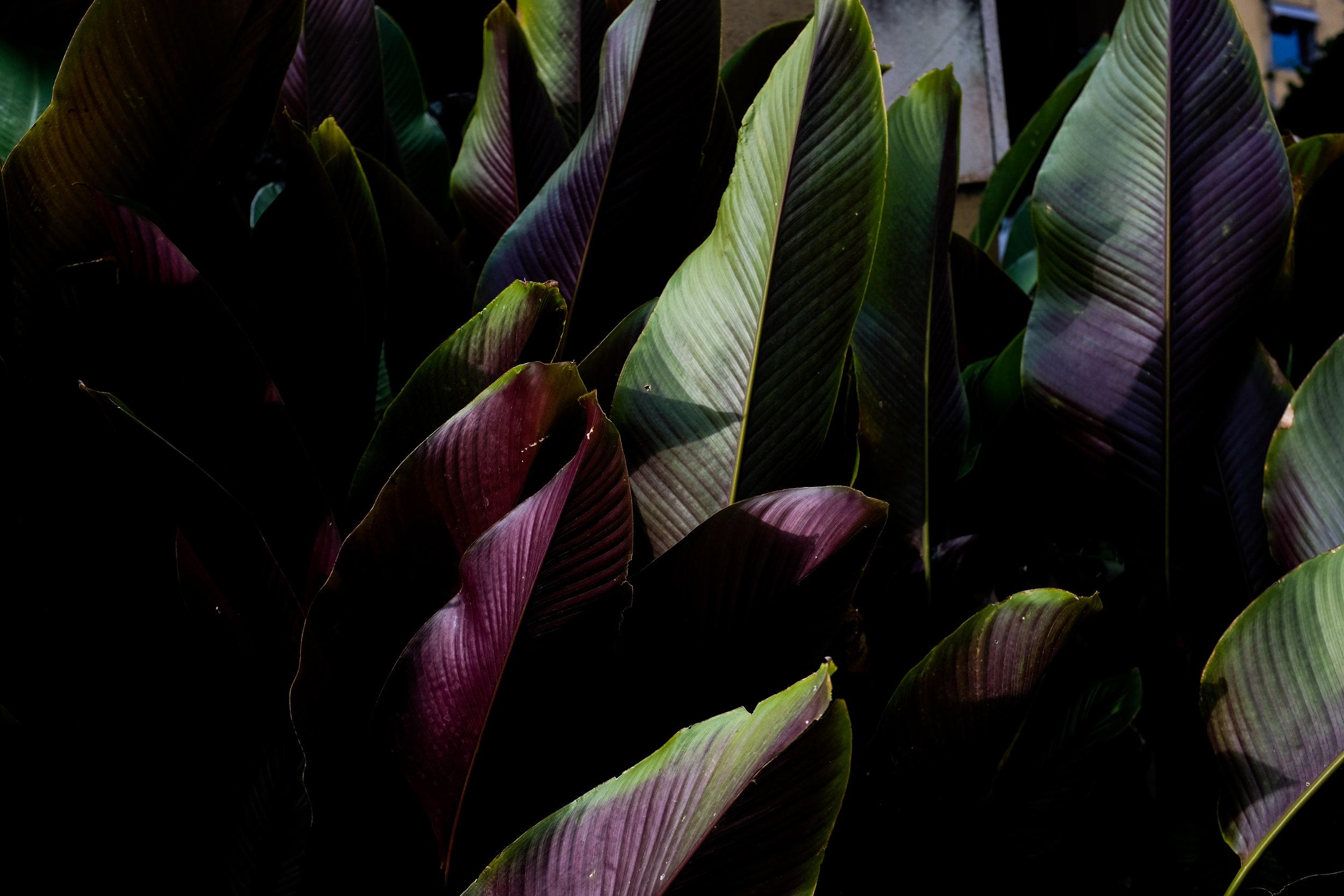 Plants of Bali, by Neave Bozorgi