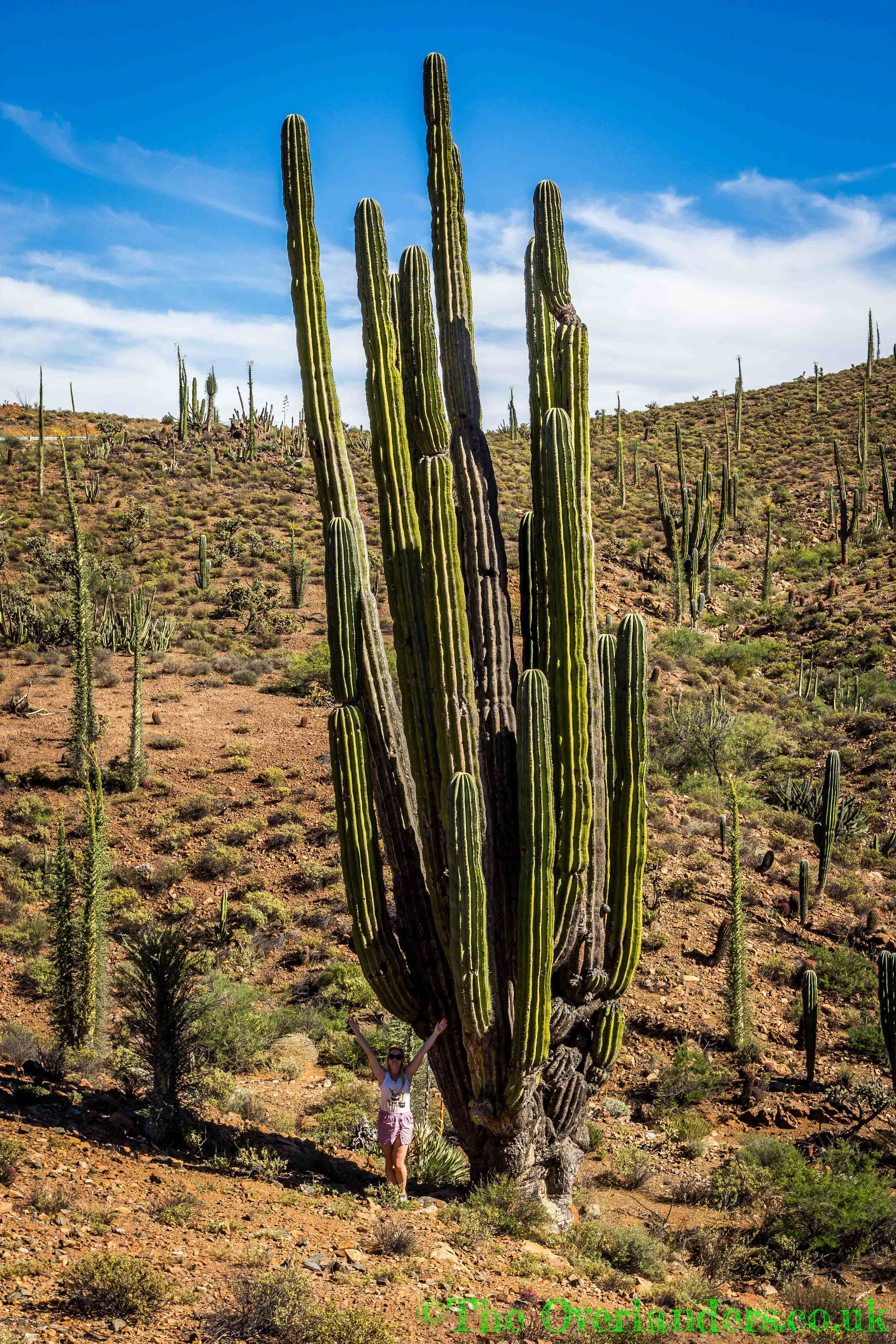 Mexico04.jpg
