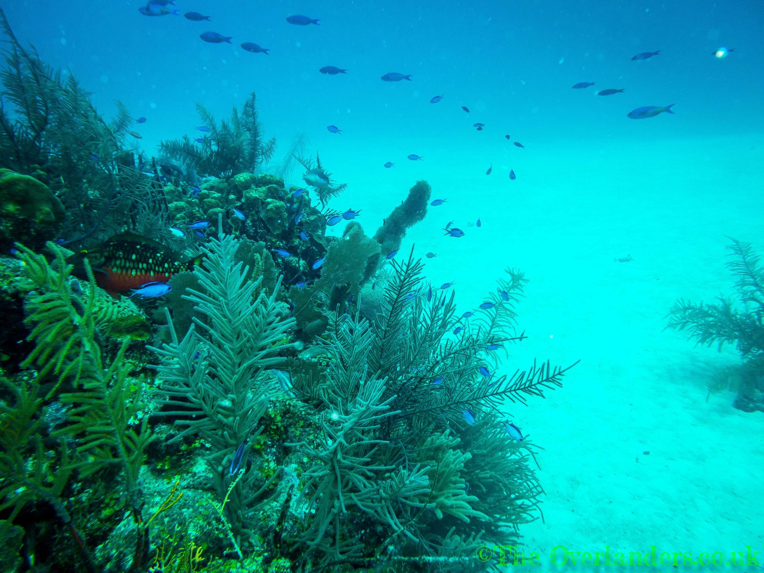 Belize-17.jpg