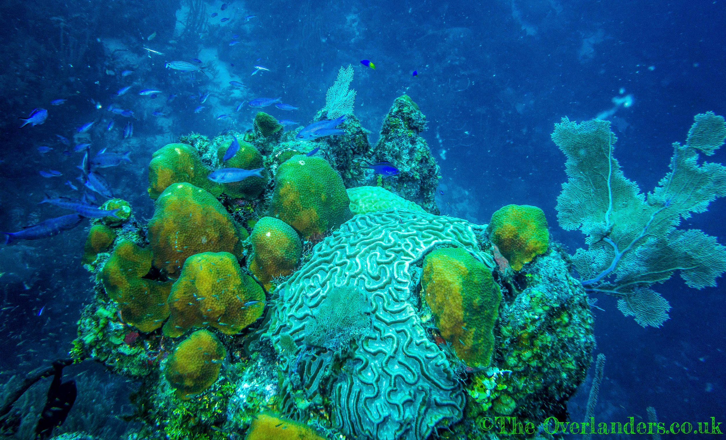 Belize-18.jpg