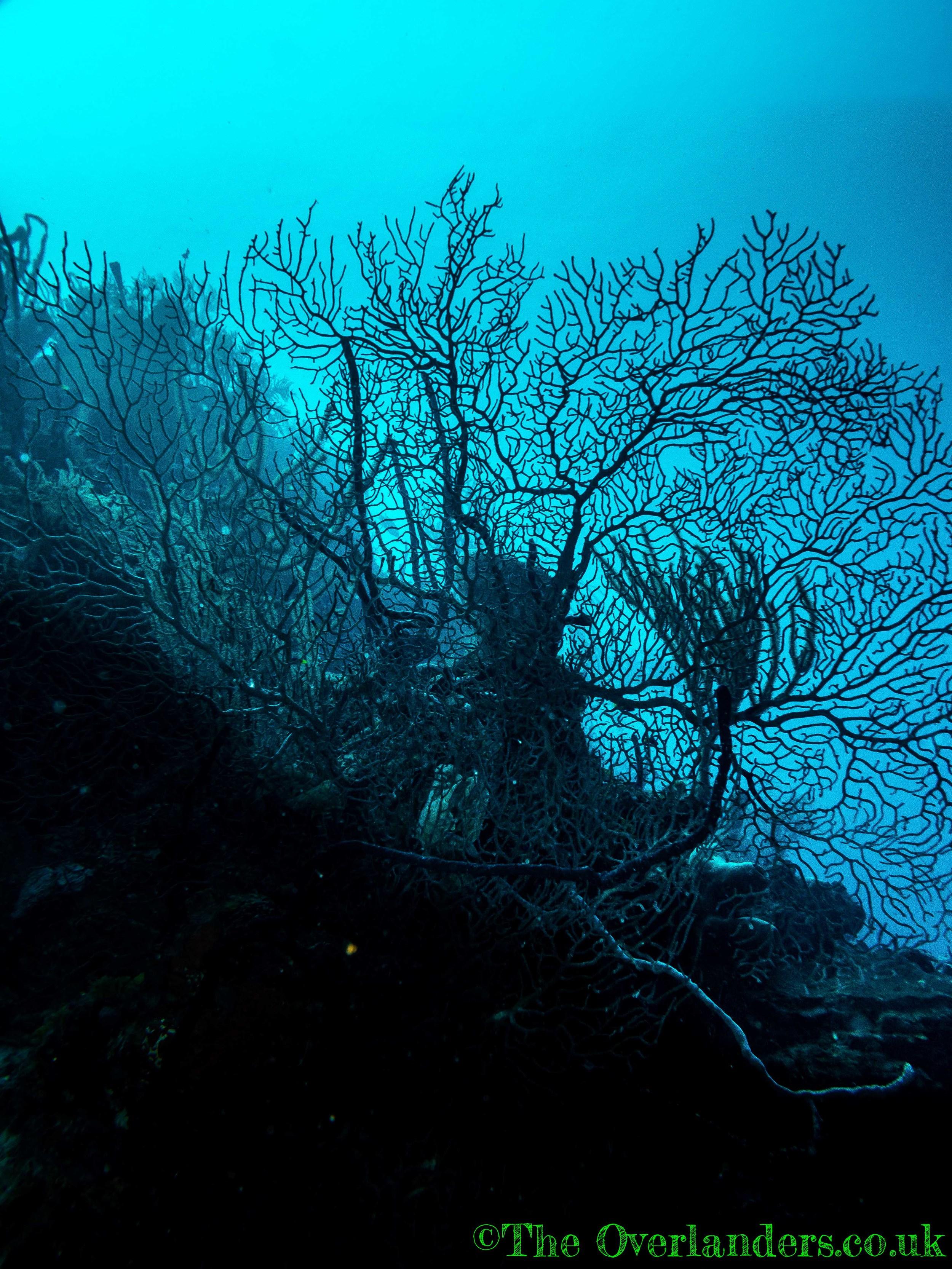 Belize-25.jpg