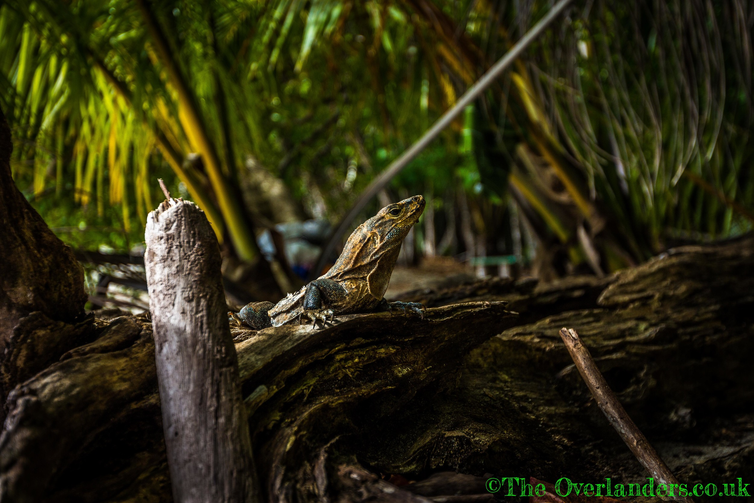 Belize-36.jpg
