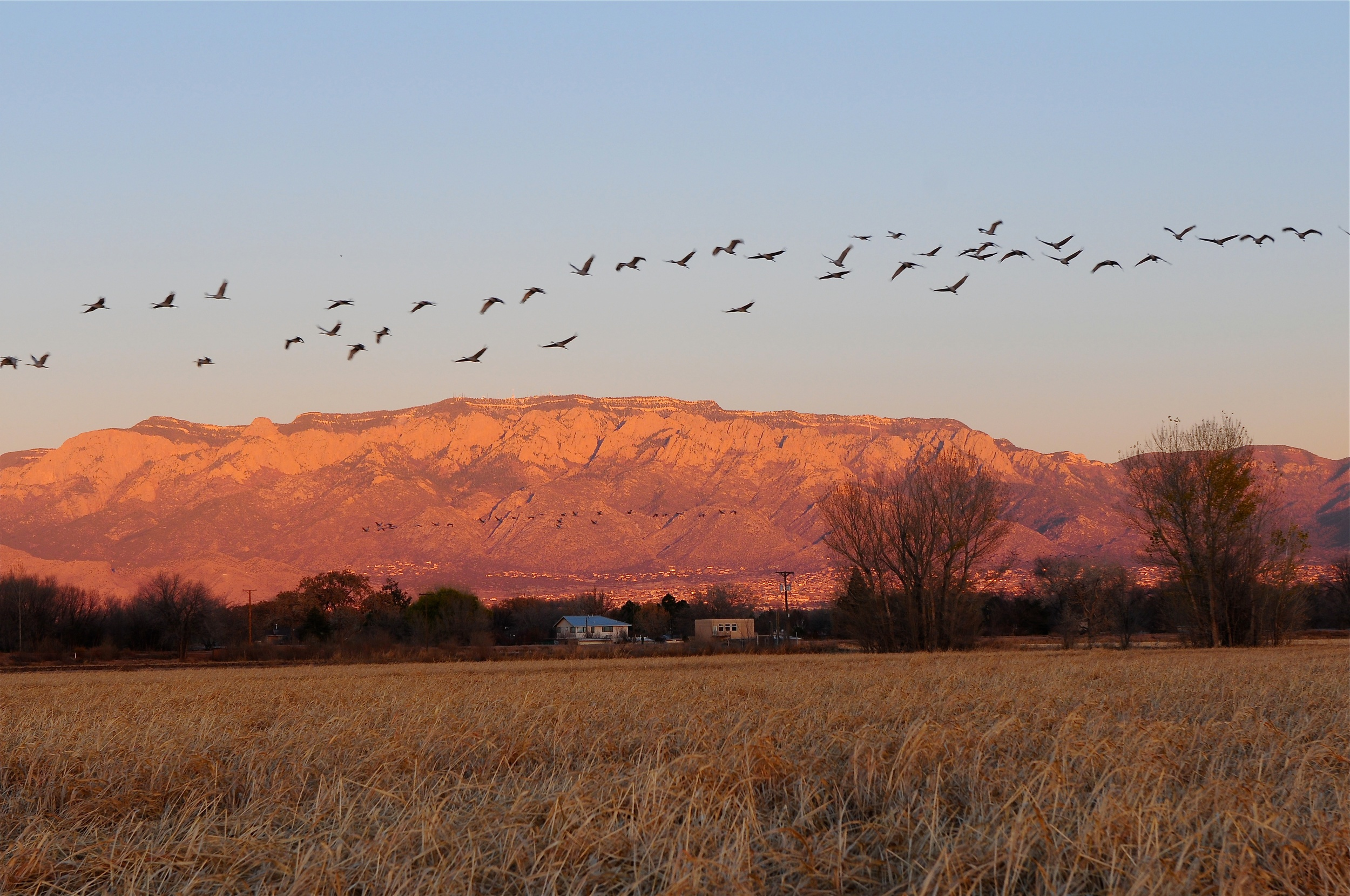Sandias with Birds.jpg