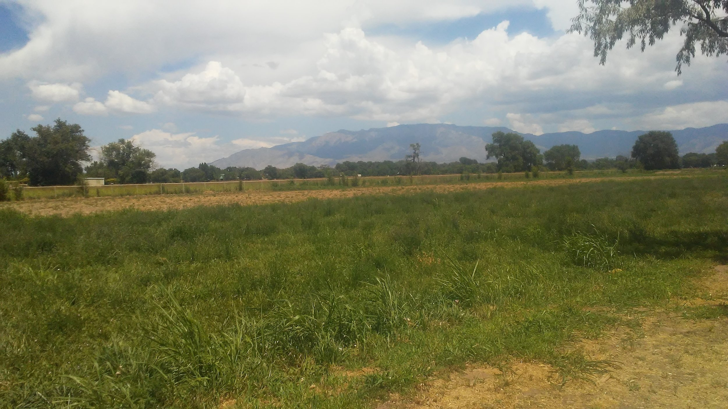 View of the Sandias from the Los Ranchos Agri-Nature Center