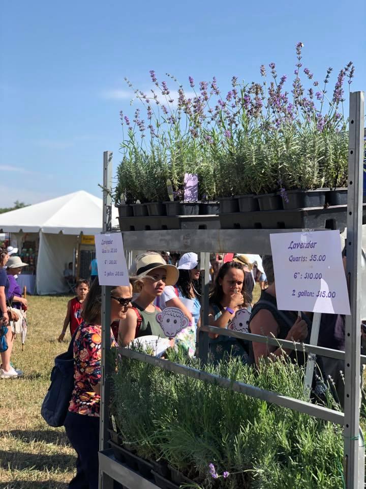 Patrons enjoying the Lavender Festival 2019
