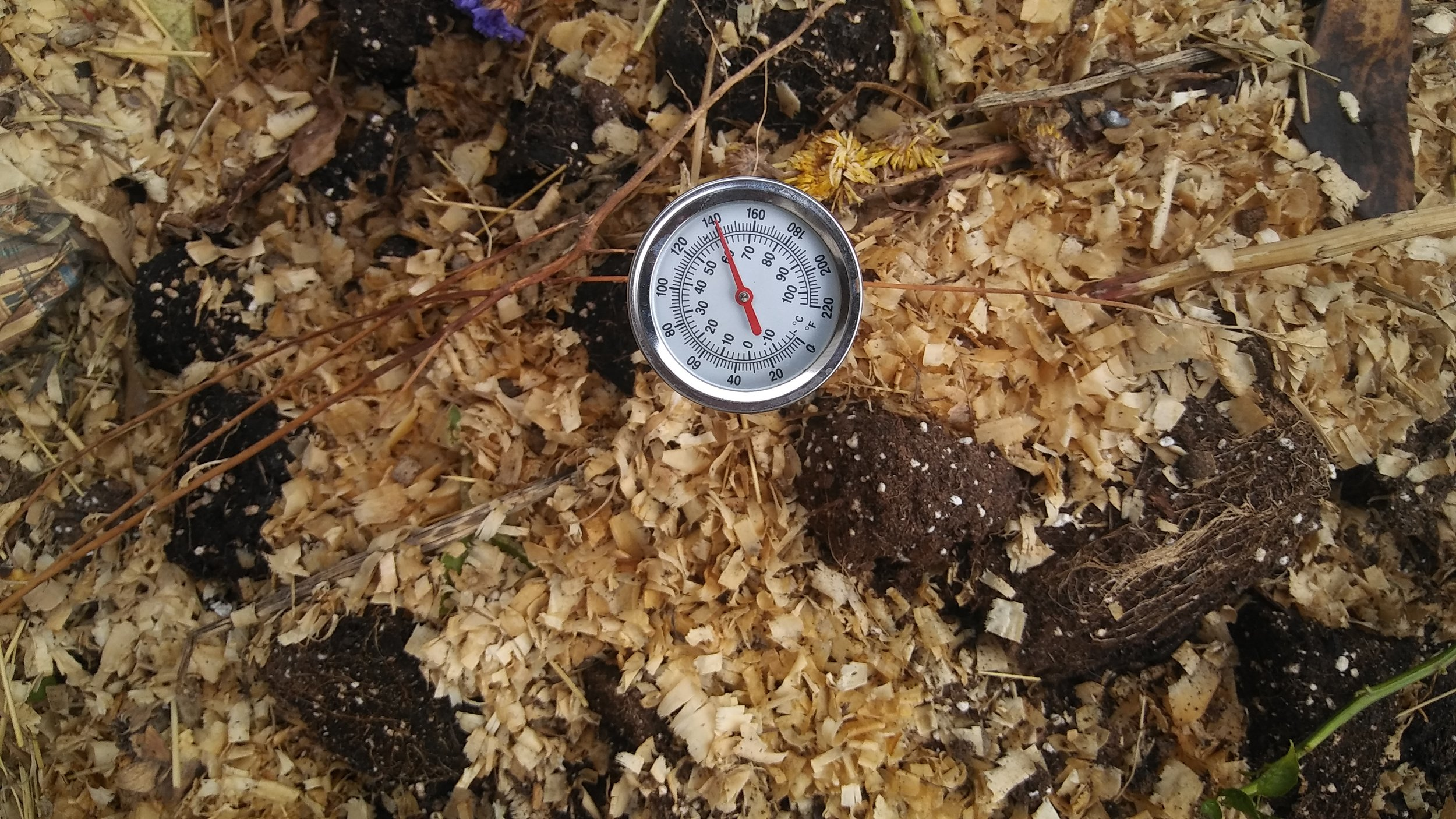 Composting is hot! E.A.T. South can get you started.