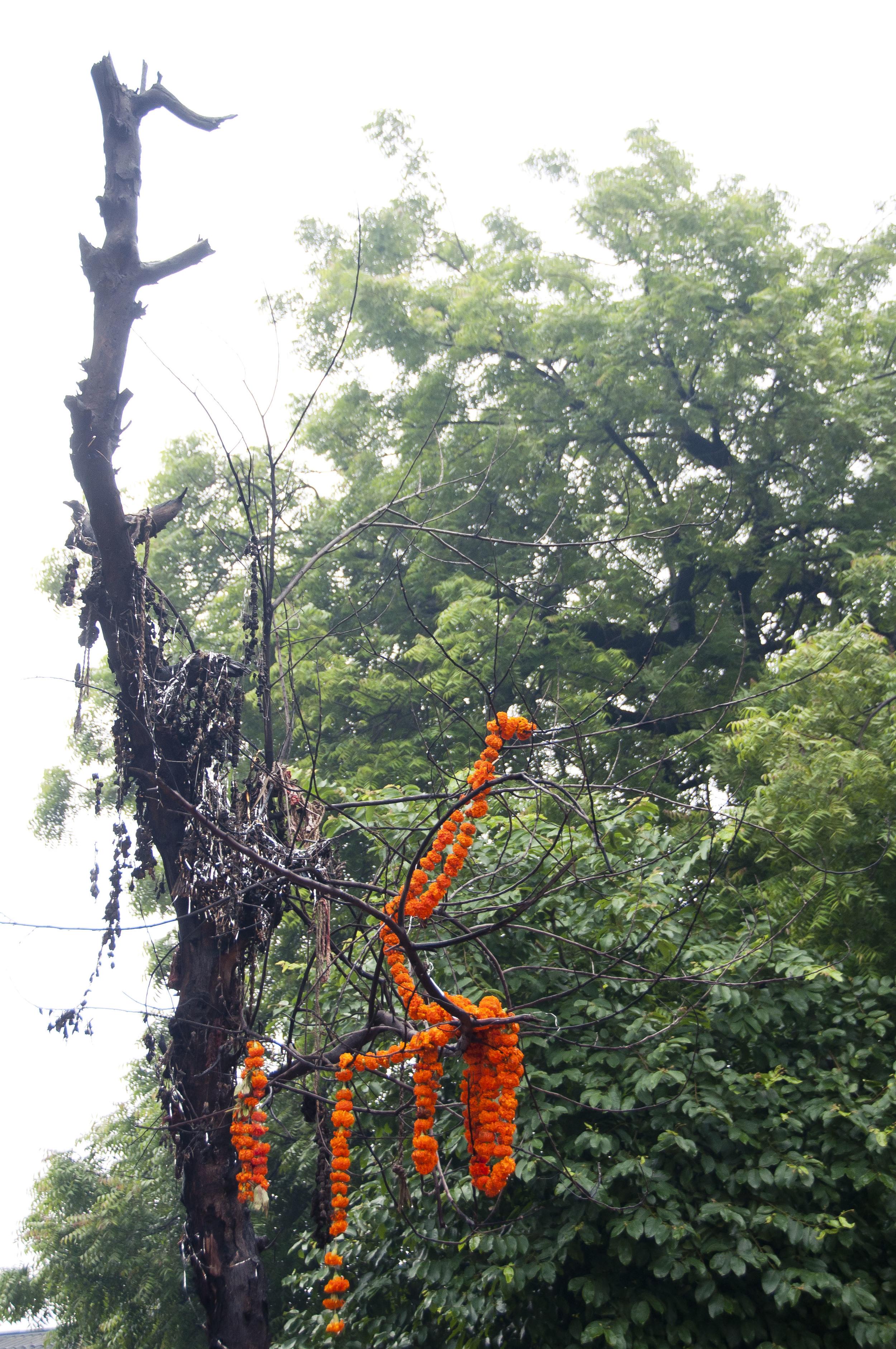 AhmedabadDayTwo071.jpg