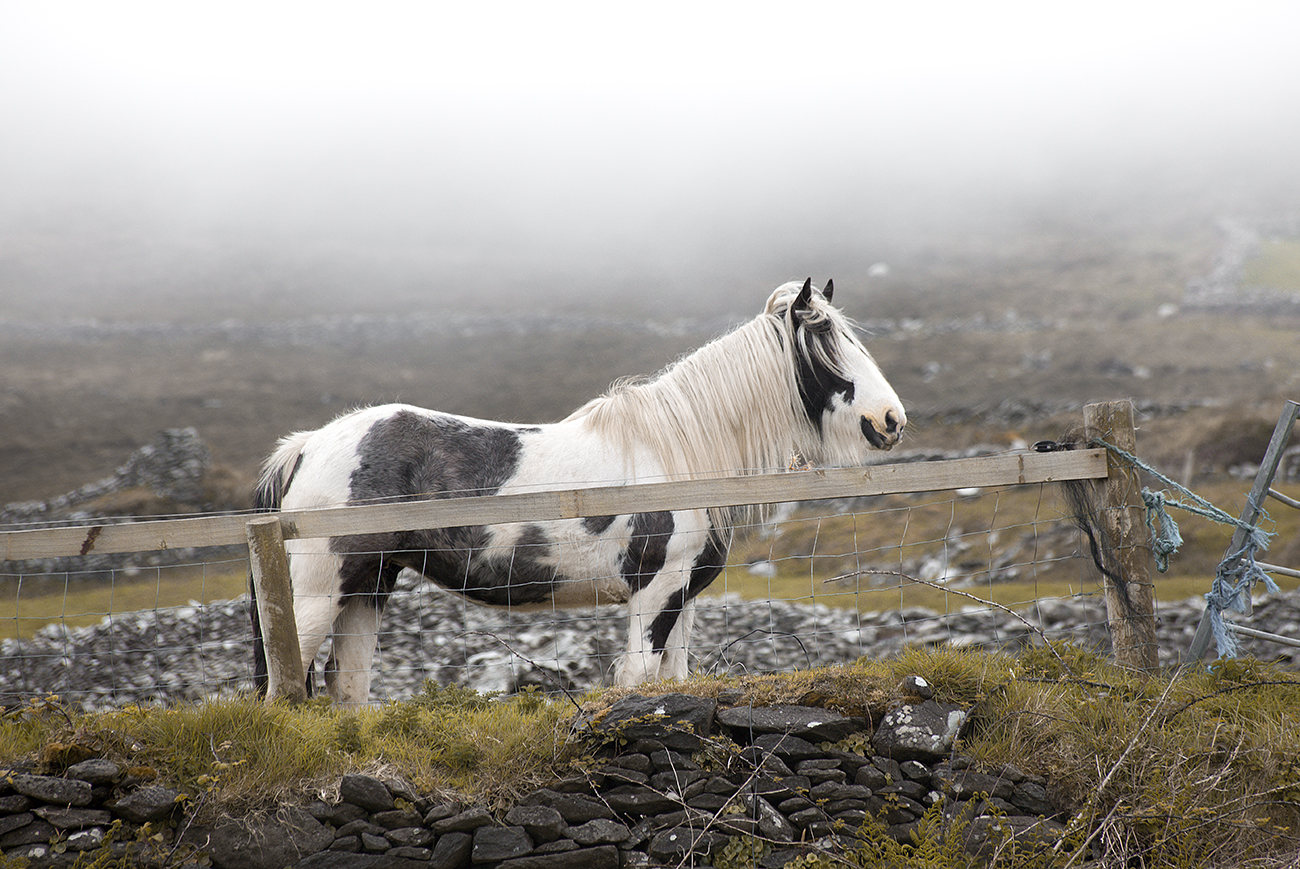 Claireonline_Sheehy_mountains_horse.jpg