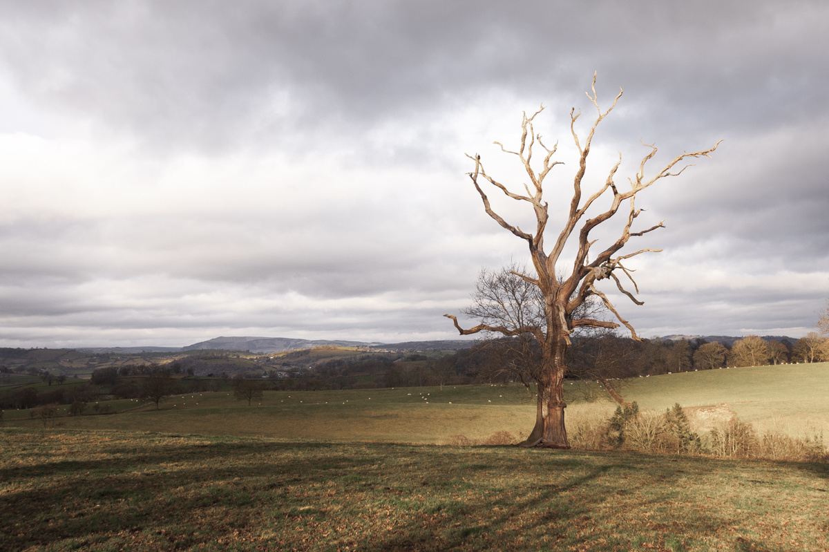 An old relic in the fields of Shropshire.