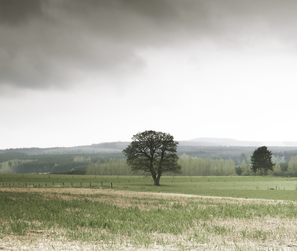 The open farmland with peaceful lonely trees on the hillside.