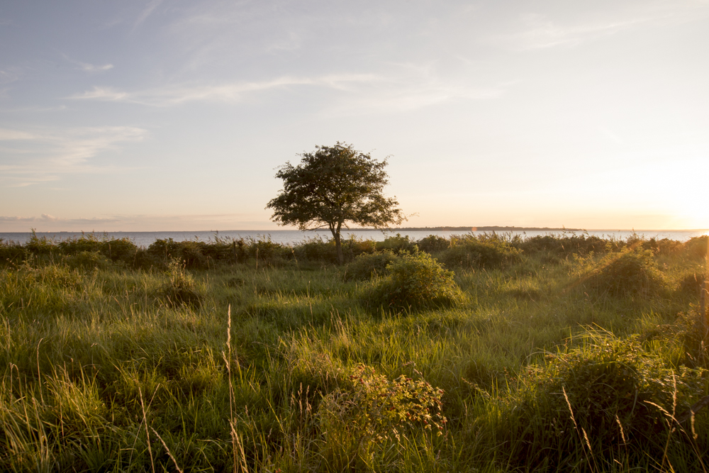 The  Skåneleden Trail , which leads along the coast, provides the best views for a sunset.