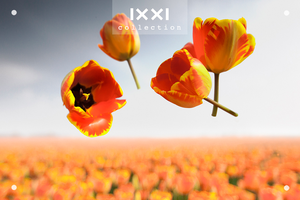 Gravity | Flower Power - Banja_Luka