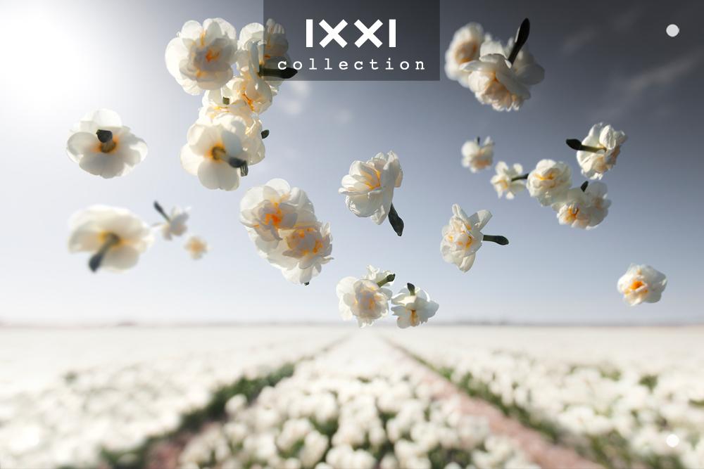 Gravity | Flower Power - Cheerfulness