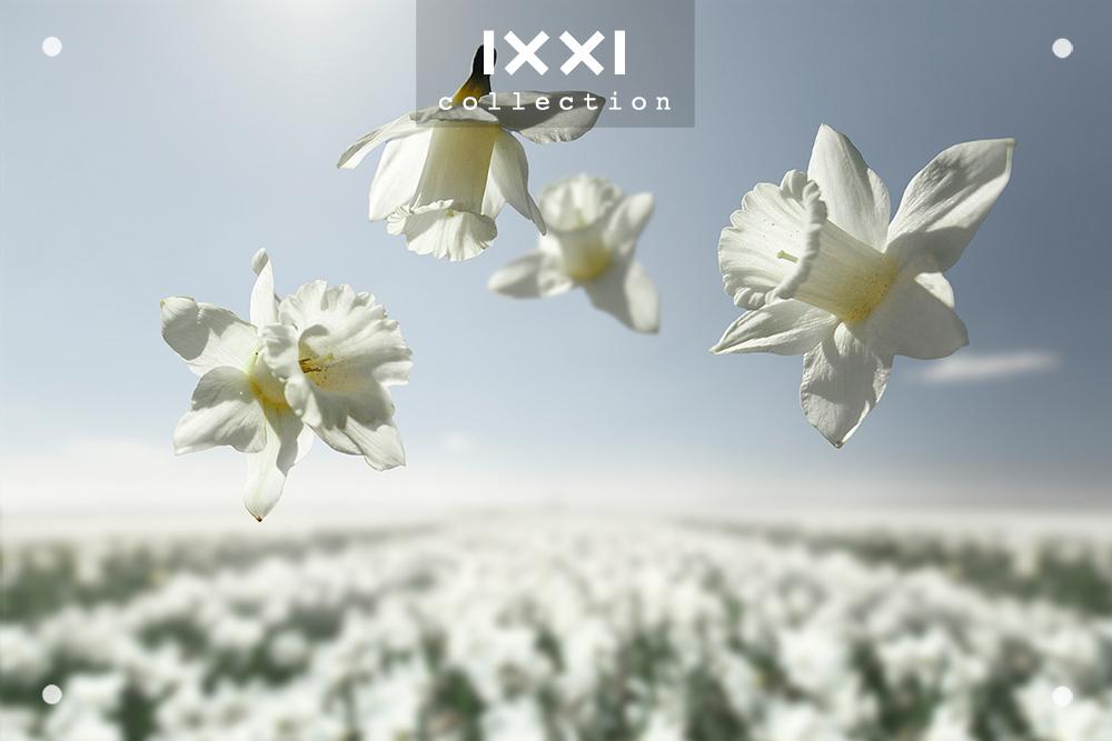 Gravity | Flower Power - Mount_Hood