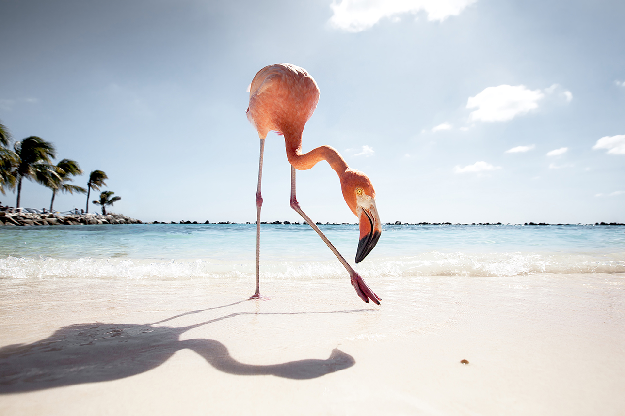 Flamingo Friday
