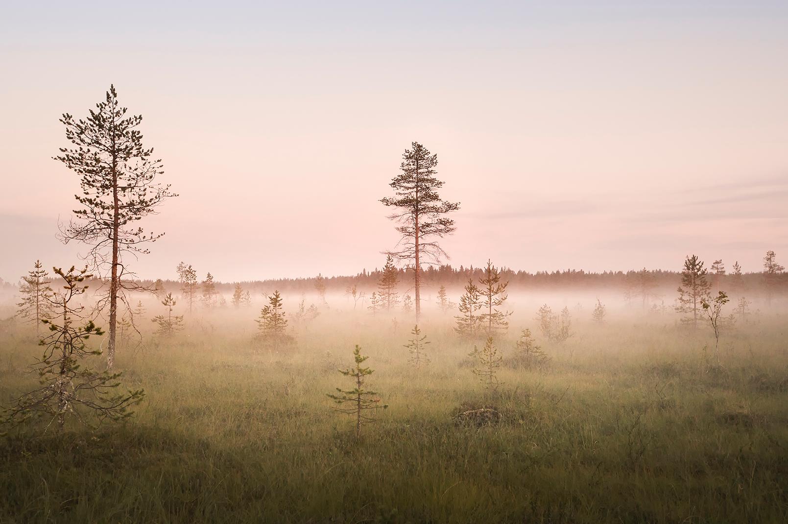 Sweden - Haparanda field