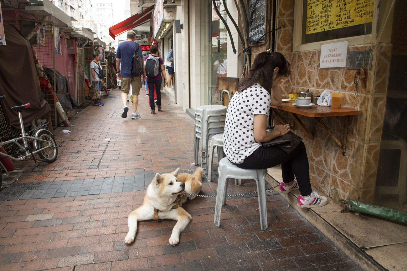 It looked like the dog was waiting patienly to be served…