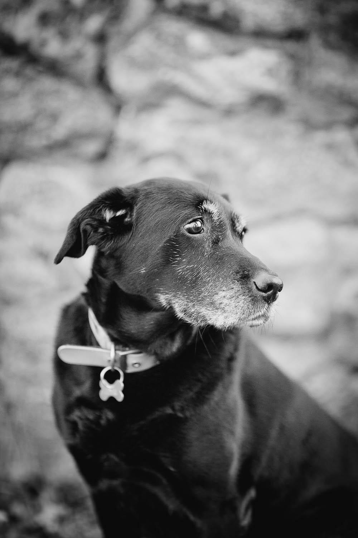 dog-photographer-maidstone-1.jpg