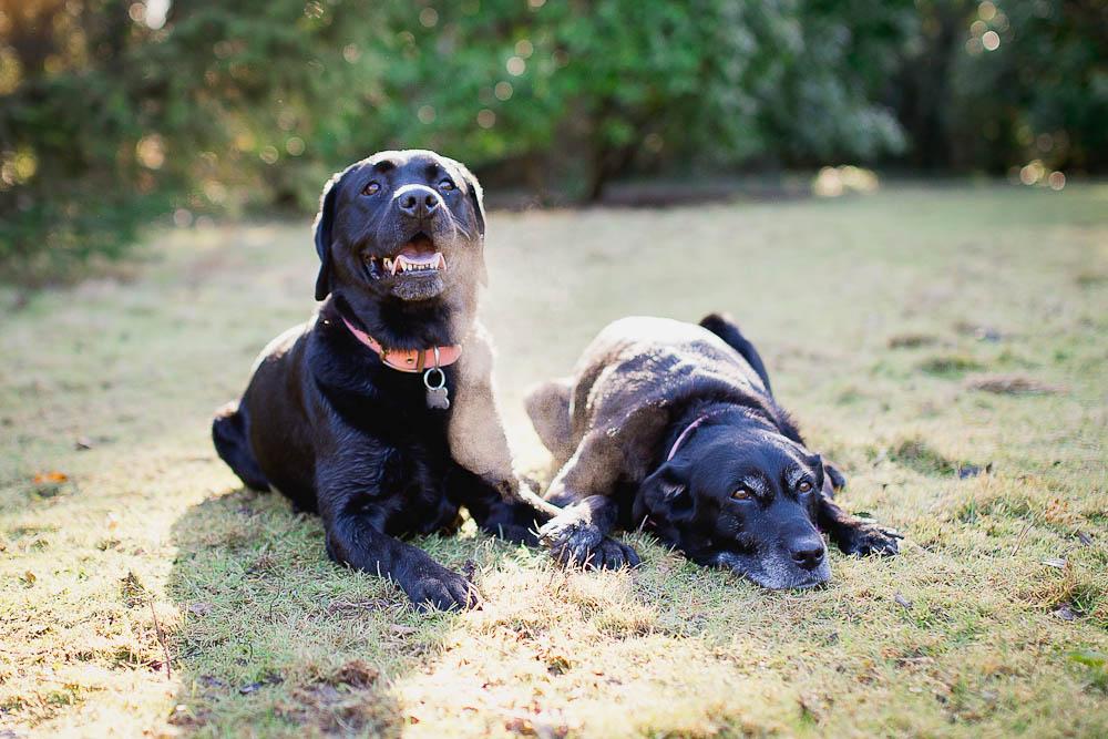 dog-photographer-maidstone-5.jpg