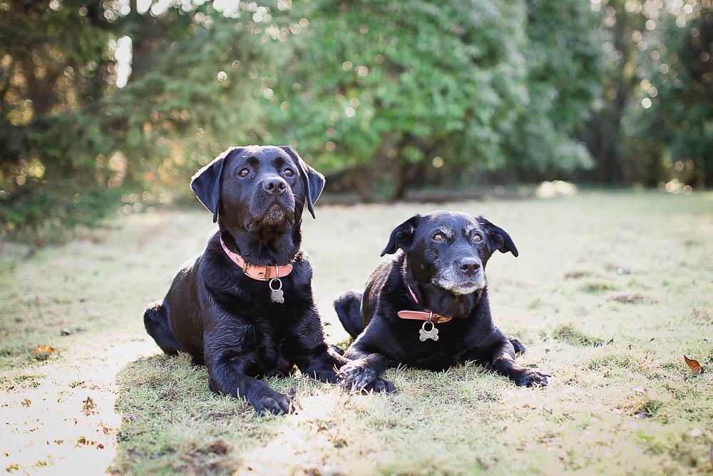 dog-photographer-maidstone-6.jpg