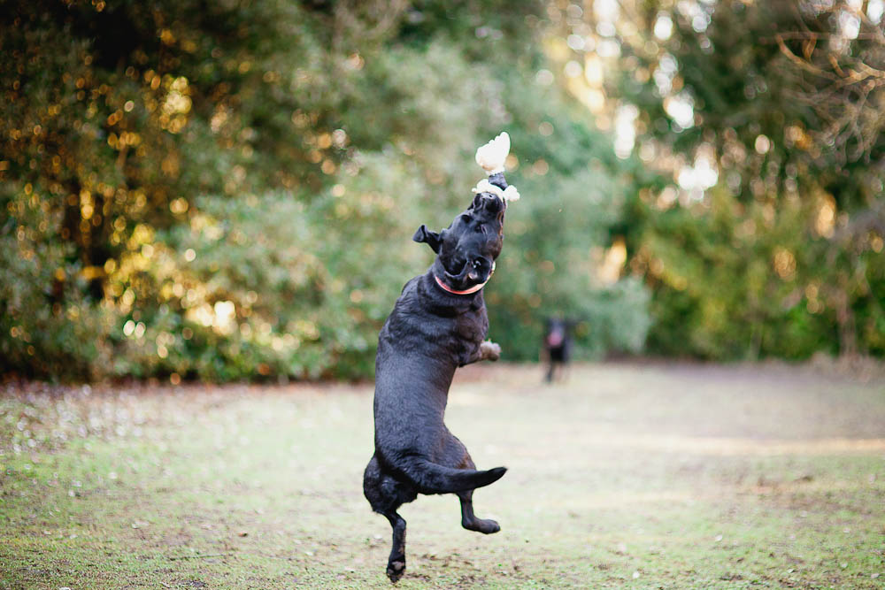 dog-photographer-maidstone-7.jpg