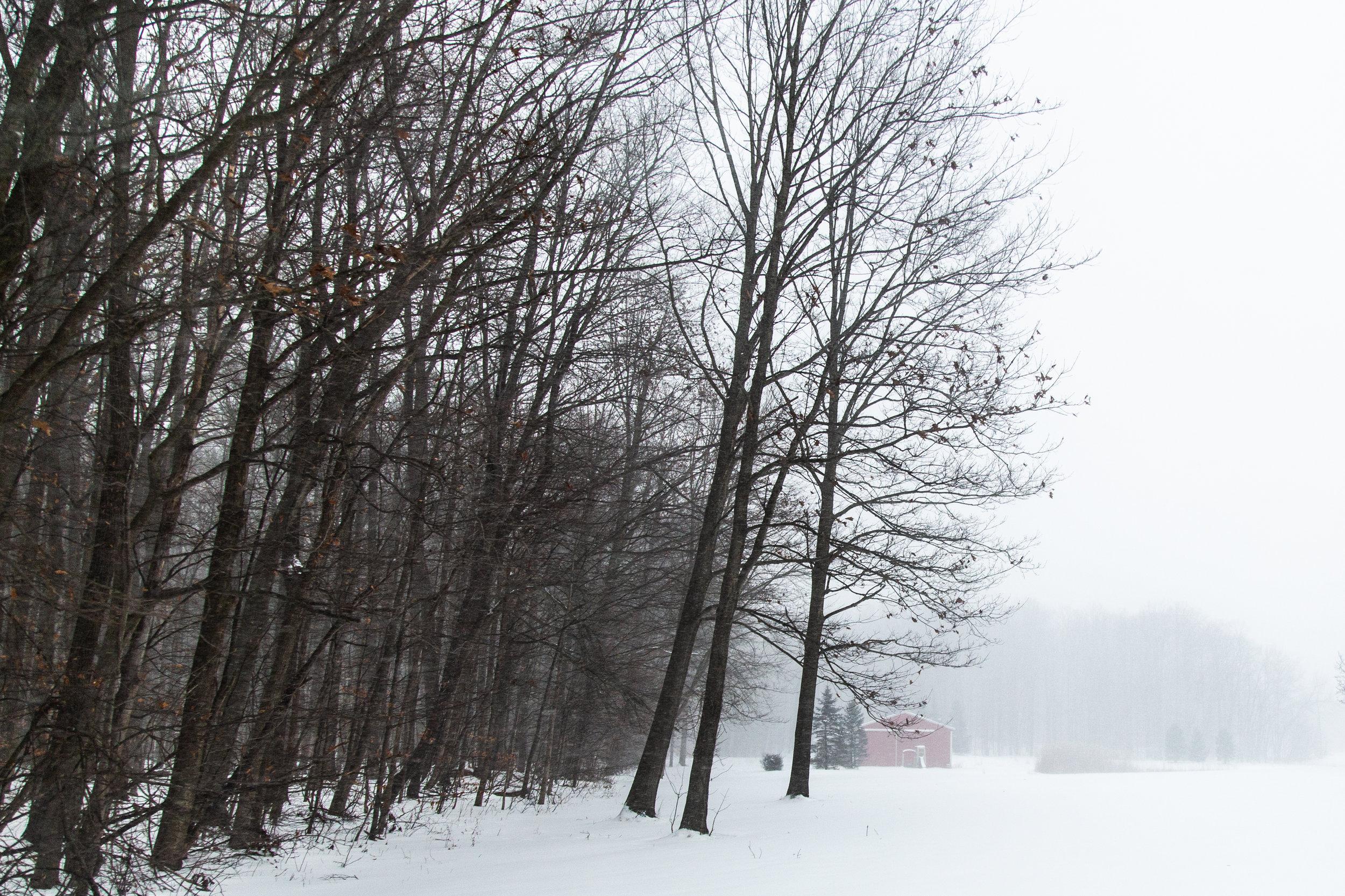 Winter_2019-2.jpg