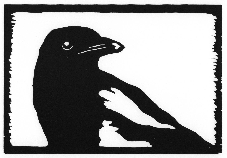 Black-Billed Magpie • © Fred Montague  $48 • image 8 x 5.5 • mat 14 x 11   Edition size: 88 • status: low quantity