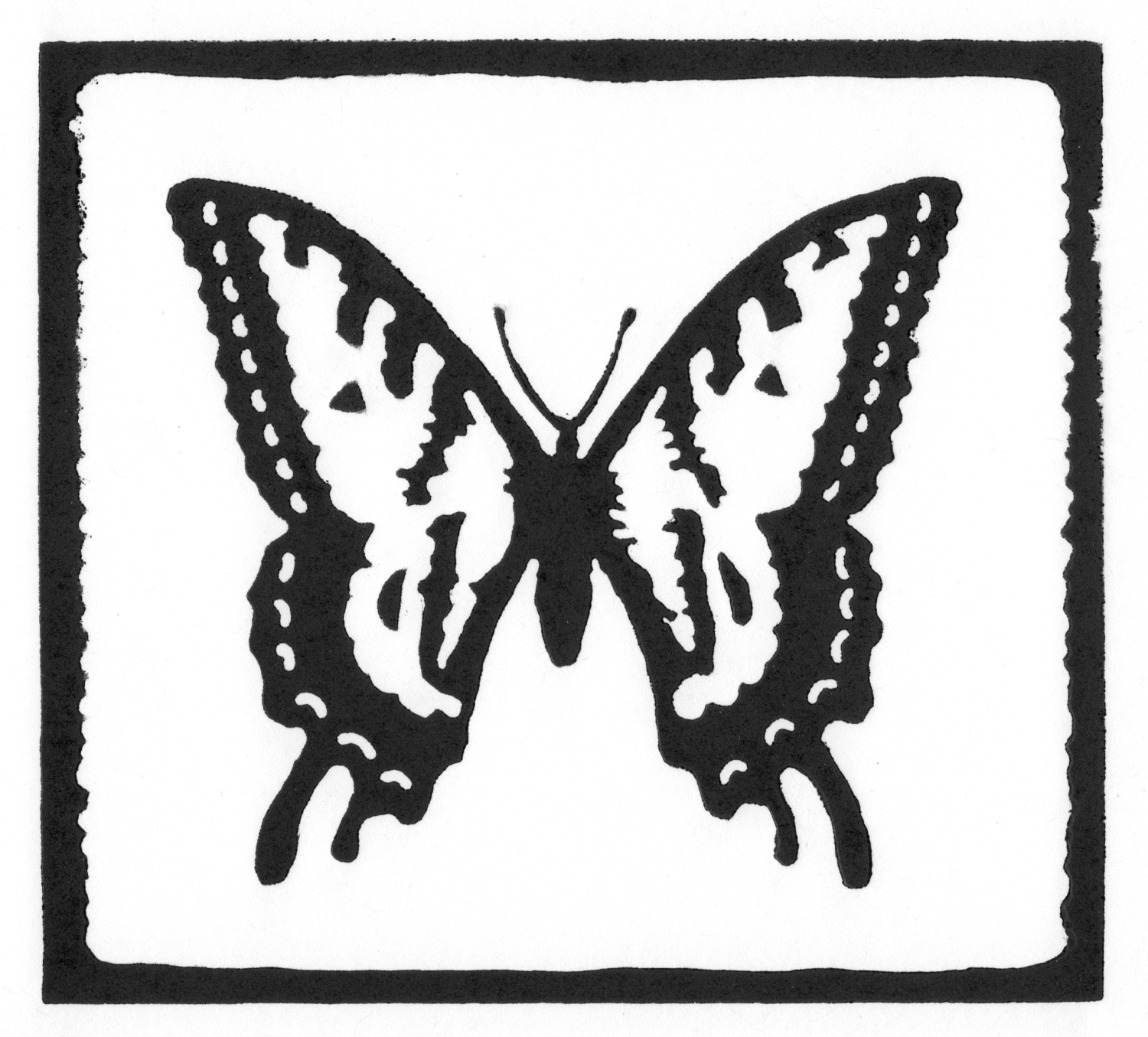 Two-Tailed Swallowtail • © Fred Montague  $48 • image 6 x 5.5 • mat 12 x 12  Edition size: 88 • status: available