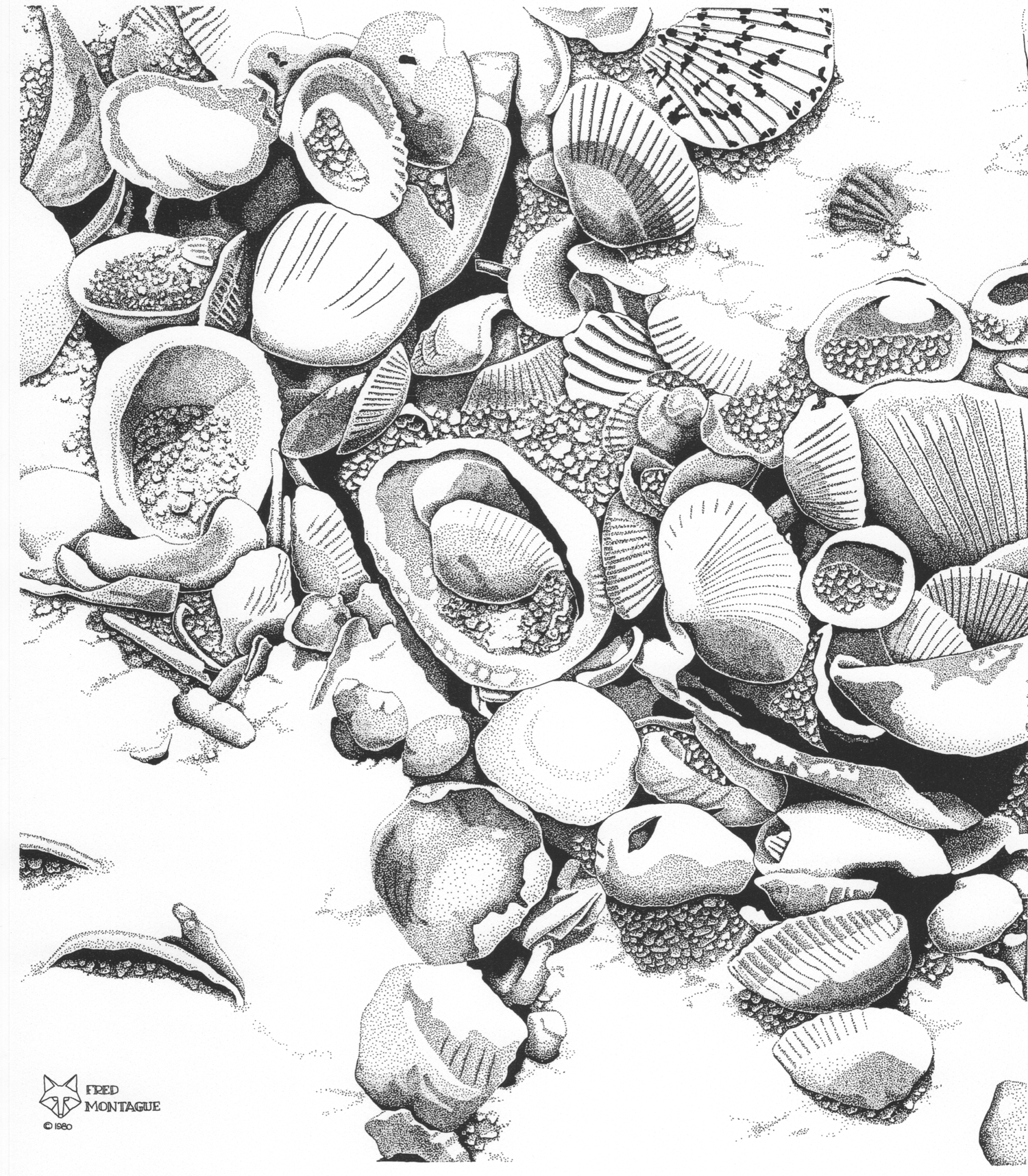 Shell Study II • © Fred Montague  $65 • Photolithograph • Image 14 x 17   matted 20 x 24   Edition size: 200 • status: available