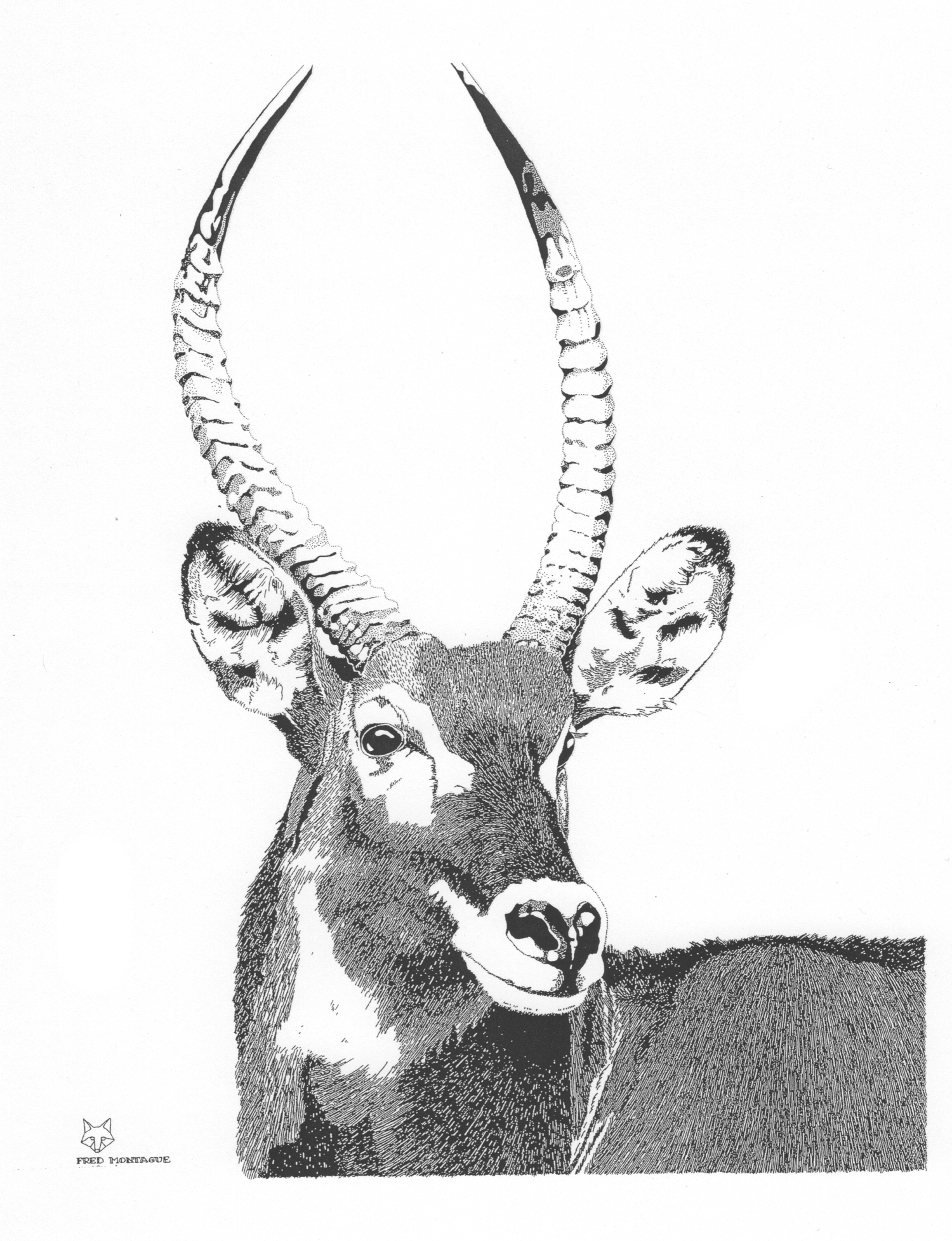 Waterbuck • © Fred Montague  $85 • Photolithograph • Image 16 x 20.5   matted 22 x 28   Edition size: 80 • status:  low quantity