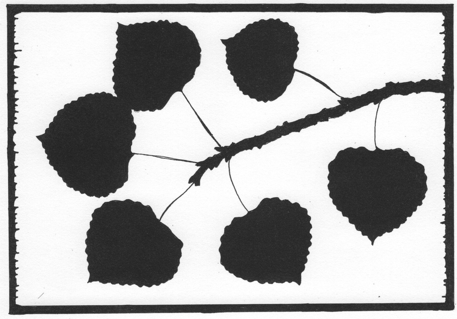 Aspen leaves • © Fred Montague  sketch for woodcut  Edition size: 88 • status: available